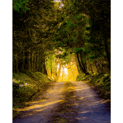 Image of Poster Print - Afternoon Sun on Irish Country Road, County Clare, Ireland Poster Print Moods of Ireland 8x10 inch
