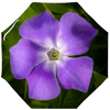 Umbrellas - Purple Irish Periwinkle Wildflower Umbrella Moods of Ireland Auto-Foldable Umbrella