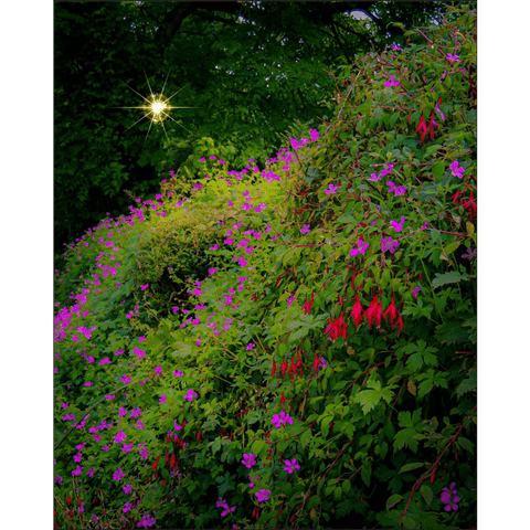 Poster Print - Roadside Cascade of Irish Wildflowers in Afternoon Sun Poster Print Moods of Ireland 8x10 inch