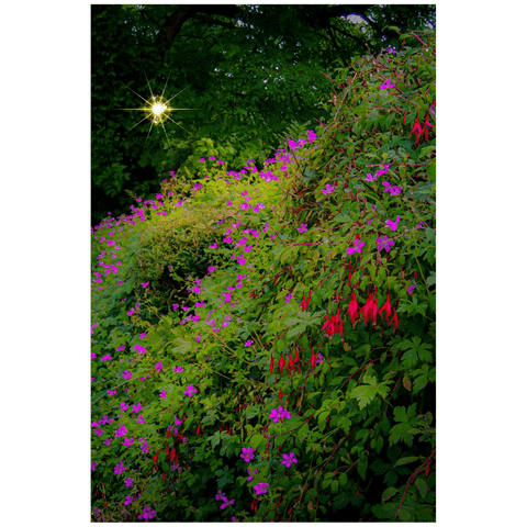 Poster Print - Roadside Cascade of Irish Wildflowers in Afternoon Sun Poster Print Moods of Ireland 20x30 inch