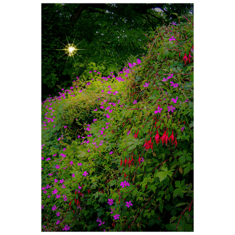 Poster Print - Roadside Cascade of Irish Wildflowers in Afternoon Sun Poster Print Moods of Ireland 12x18 inch