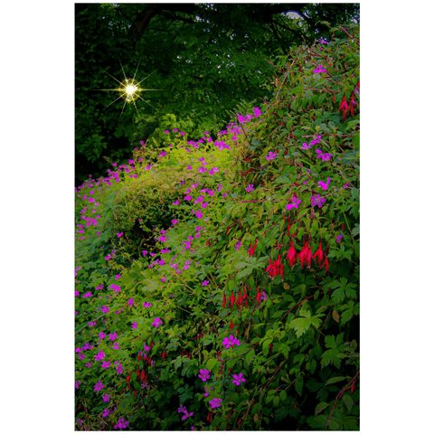 Poster Print - Roadside Cascade of Irish Wildflowers in Afternoon Sun Poster Print Moods of Ireland 24x36 inch