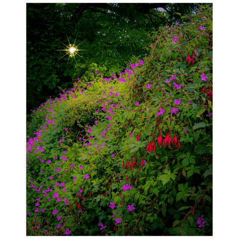 Poster Print - Roadside Cascade of Irish Wildflowers in Afternoon Sun Poster Print Moods of Ireland 16x20 inch