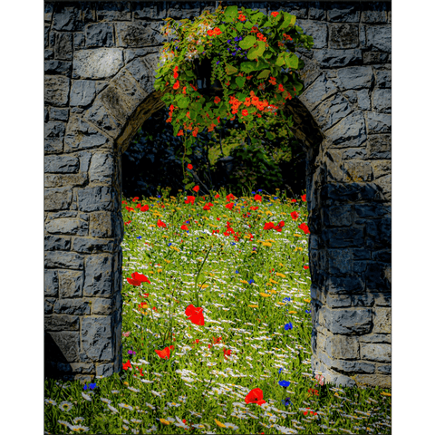 Image of Poster Print - Portal to Secret Irish Wildflower Garden Poster Print Moods of Ireland 8x10 inch