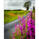 Poster Print - Wildflower-lined Irish Country Road Poster Print Moods of Ireland