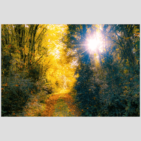 Image of Print - Woodland Path through Paradise, County Clare, Ireland - James A. Truett - Moods of Ireland - Irish Art