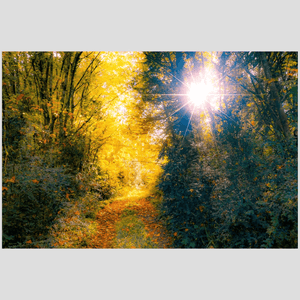 Print - Woodland Path through Paradise, County Clare, Ireland - James A. Truett - Moods of Ireland - Irish Art