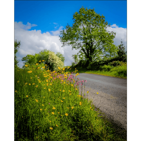 Image of Poster Print - Wildflowers of Liscormick, County Clare Poster Print Moods of Ireland 8x10 inch