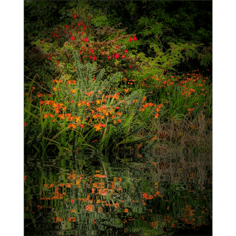 Image of Poster Print - Reflections of Summer in the Irish Countryside Poster Print Moods of Ireland 8x10 inch
