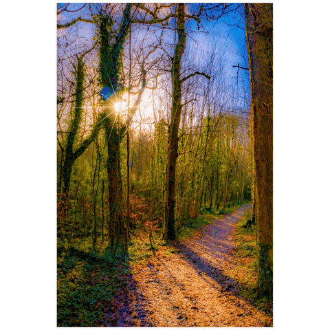 Nature Art Print - Autumn Path in Dromore Wood, County Clare Poster Print Moods of Ireland 20x30 inch