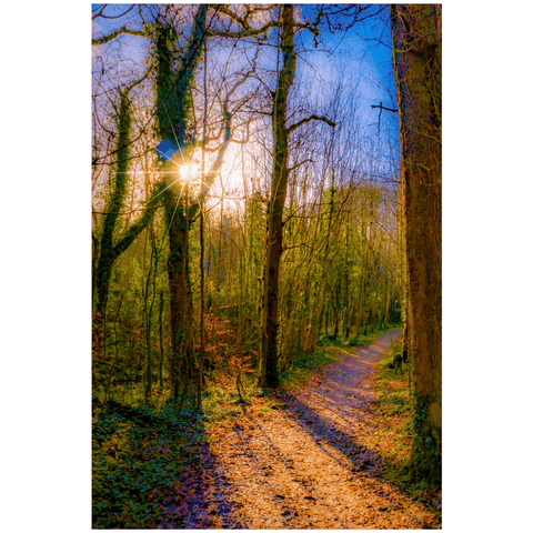 Nature Art Print - Autumn Path in Dromore Wood, County Clare Poster Print Moods of Ireland 24x36 inch