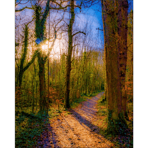 Nature Art Print - Autumn Path in Dromore Wood, County Clare Poster Print Moods of Ireland 8x10 inch