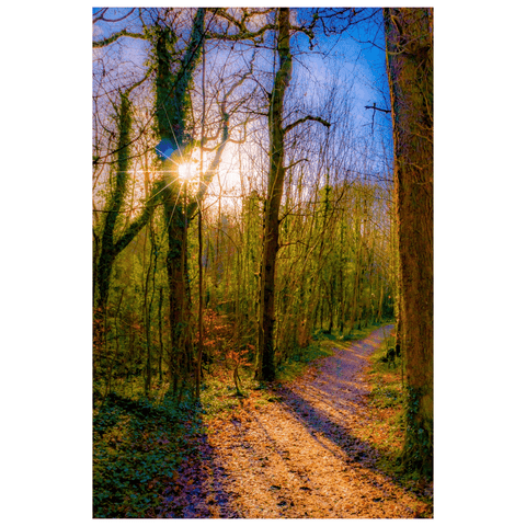 Nature Art Print - Autumn Path in Dromore Wood, County Clare Poster Print Moods of Ireland 12x18 inch