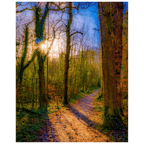 Nature Art Print - Autumn Path in Dromore Wood, County Clare Poster Print Moods of Ireland 16x20 inch