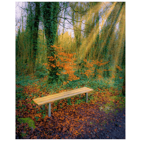 Print - Bench at Dromore Wood in Autumn Poster Print Moods of Ireland 16x20 inch