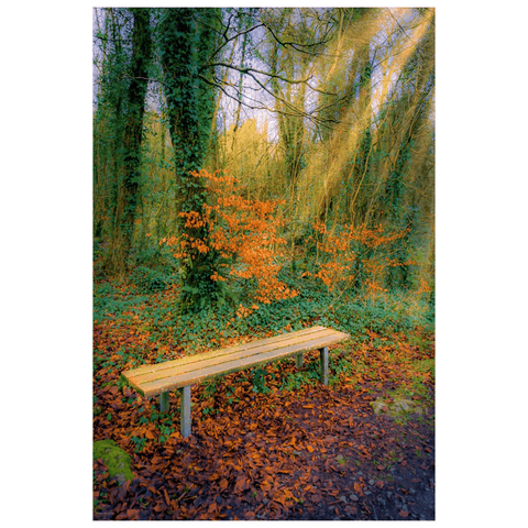 Image of Print - Bench at Dromore Wood in Autumn - James A. Truett - Moods of Ireland - Irish Art