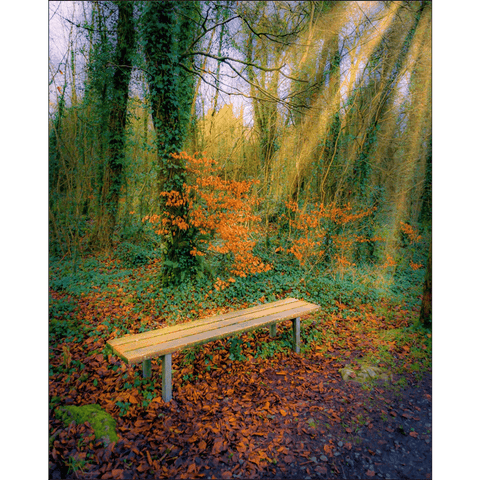 Print - Bench at Dromore Wood in Autumn Poster Print Moods of Ireland 8x10 inch