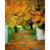Print - Green Gate in Autumn, County Clare Poster Print Moods of Ireland 8x10 inch
