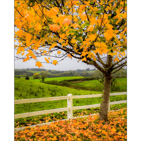 Image of Print - Autumn Leaves in Ballynacally, County Clare Poster Print Moods of Ireland 8x10 inch