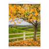 Wall Hanging - Autumn Leaves in Ballynacally, County Clare Wall Hanging Moods of Ireland 12x16 inch White