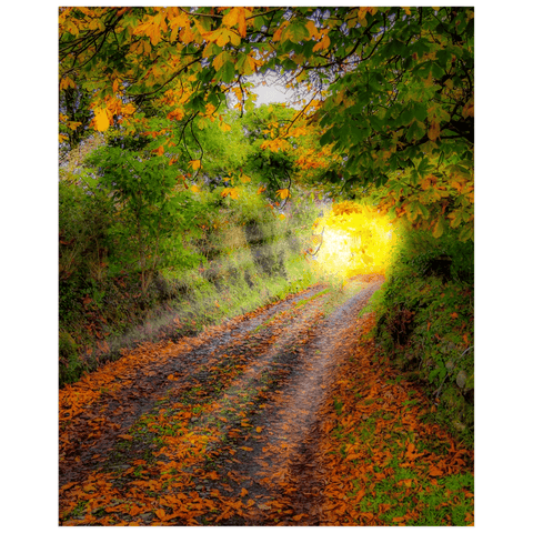 Print - Path to Cullinan Cottage, County Clare Poster Print Moods of Ireland 16x20 inch