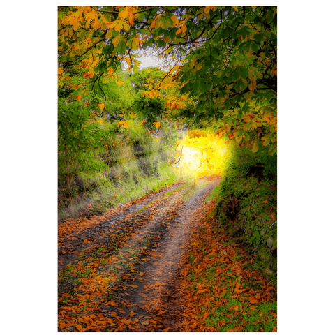 Print - Path to Cullinan Cottage, County Clare Poster Print Moods of Ireland 20x30 inch