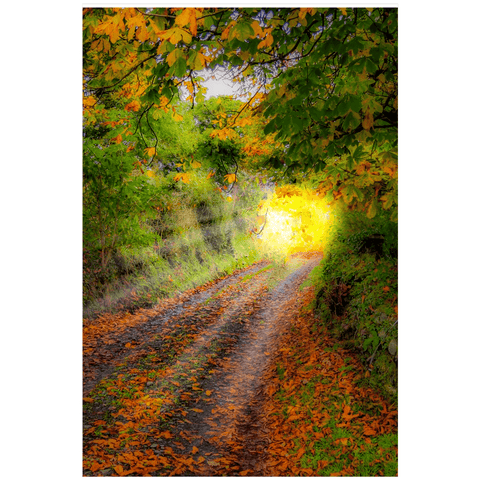 Print - Path to Cullinan Cottage, County Clare Poster Print Moods of Ireland 24x36 inch