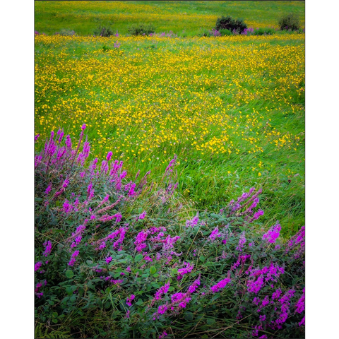 Image of Print - Irish Countryside Summer Wildflower Meadow Poster Print Moods of Ireland 8x10 inch