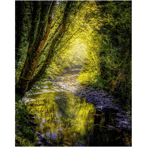 Image of Print - Sunrays through Canopy over Owenslieve River, County Clare - James A. Truett - Moods of Ireland - Irish Art