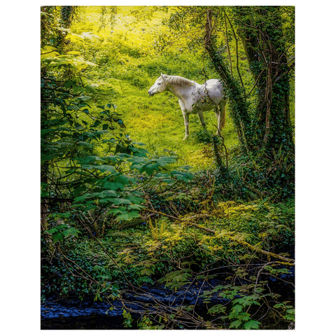 Image of Print - White Horse in 40 Shades of Green, County Clare - James A. Truett - Moods of Ireland - Irish Art