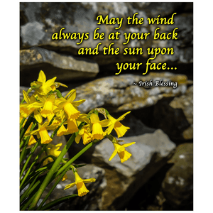 Print - Irish Blessing with Daffodils and Stone Wall Poster Print Moods of Ireland 20x24 inch