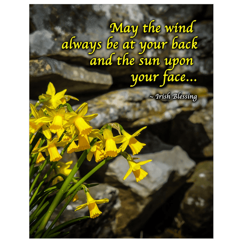 Image of Print - Irish Blessing with Daffodils and Stone Wall Poster Print Moods of Ireland 11x14 inch