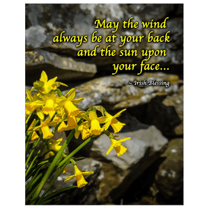 Print - Irish Blessing with Daffodils and Stone Wall Poster Print Moods of Ireland 11x14 inch
