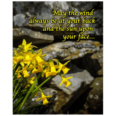 Image of Print - Irish Blessing with Daffodils and Stone Wall Poster Print Moods of Ireland 16x20 inch