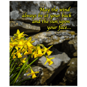 Print - Irish Blessing with Daffodils and Stone Wall Poster Print Moods of Ireland 16x20 inch