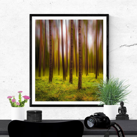 Image of Print - Ethereal Mood in Portumna Forest Park, County Galway Poster Print Moods of Ireland 20x30 inch