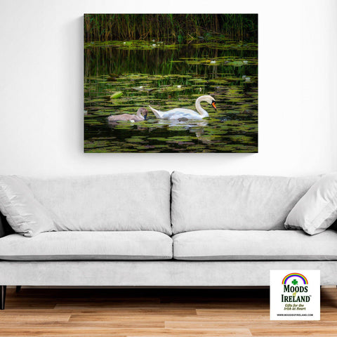 Image of Canvas Wrap - Cygnet following Swan in Dromoland Lough, County Clare - James A. Truett - Moods of Ireland - Irish Art