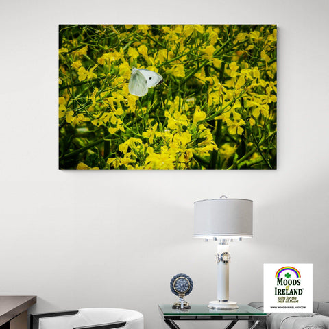 Image of Canvas Wrap - Butterfly and Yellow Wildflowers on Galway Bay - James A. Truett - Moods of Ireland - Irish Art