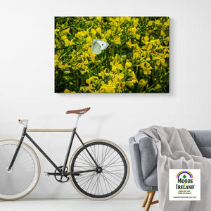 Canvas Wrap - Butterfly and Yellow Wildflowers on Galway Bay - James A. Truett - Moods of Ireland - Irish Art