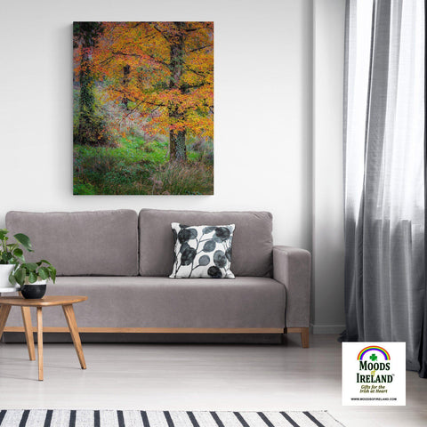 Image of Canvas Wrap - Autumn Tree in Clondegad Wood, County Clare - James A. Truett - Moods of Ireland - Irish Art
