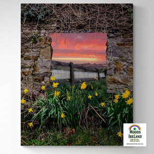 Canvas Wrap - Daffodil Sunrise in the Irish Countryside - James A. Truett - Moods of Ireland - Irish Art