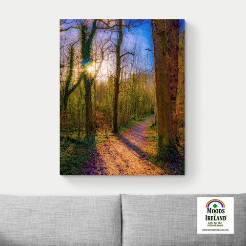 Image of Canvas Wrap - Autumn Path in Dromore Wood, County Clare Canvas Wrap Moods of Ireland