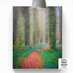 Canvas Wrap - Misty Path in Coole Park, County Galway - James A. Truett - Moods of Ireland - Irish Art