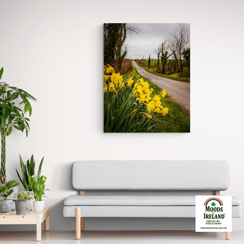Canvas Wrap - Irish Spring Daffodils on County Clare Country Road - James A. Truett - Moods of Ireland - Irish Art