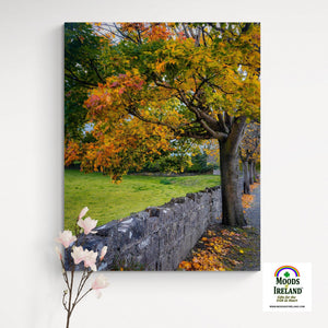 Canvas Wrap - Autumn Tree at Kildysart, County Clare - James A. Truett - Moods of Ireland - Irish Art