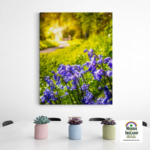 Canvas Wrap - Irish Bluebells in Spring Sun, County Clare - James A. Truett - Moods of Ireland - Irish Art