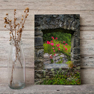 Canvas Wraps - Wild Irish Roses in County Galway, Ireland Canvas Wrap Moods of Ireland