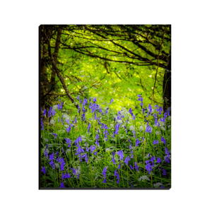 Canvas Wrap - Bluebells in Clondegad Wood, County Clare - James A. Truett - Moods of Ireland - Irish Art