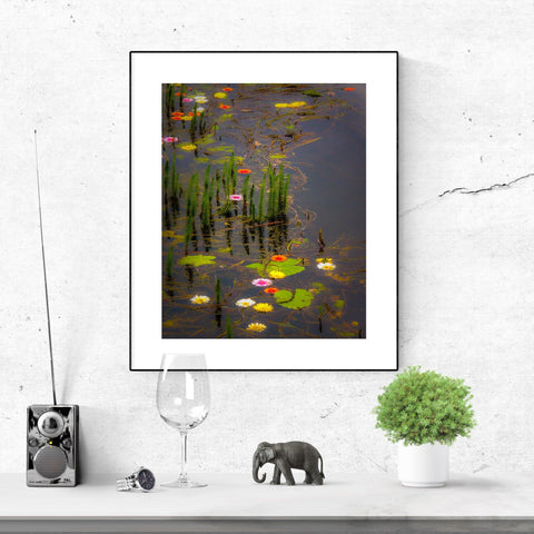 Image of Canvas Wrap - Water Flowers at Markree Castle, County Sligo Canvas Wrap Moods of Ireland