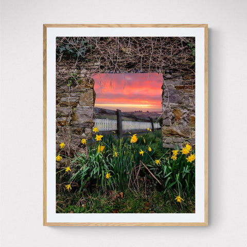 Print - Daffodil Sunrise in the Irish Countryside - James A. Truett - Moods of Ireland - Irish Art